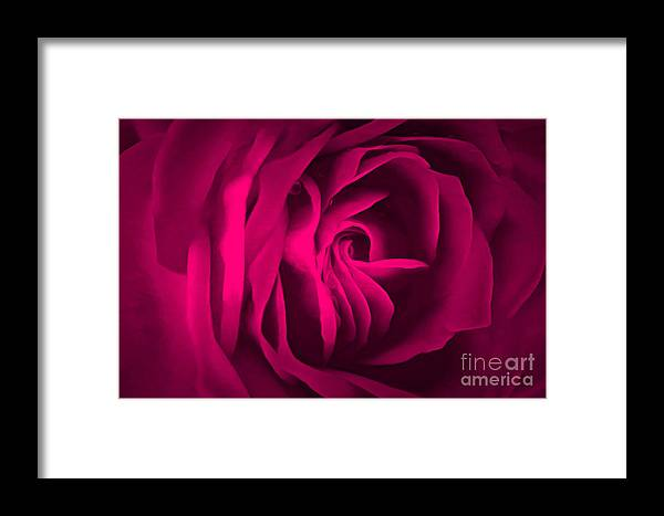 Rose Framed Print featuring the photograph Love Of A Lifetime by Krissy Katsimbras