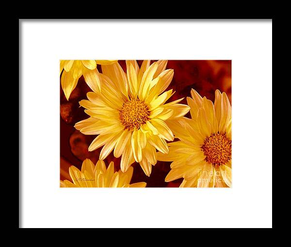 Flowers Framed Print featuring the photograph Lovely Mums by Patricia L Davidson