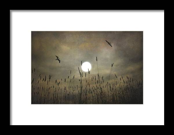 Nature Framed Print featuring the photograph Lovers Moon by Tom York Images