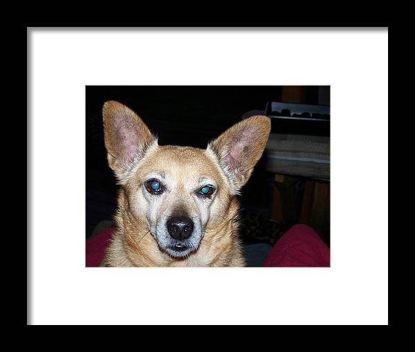 Digital Artwork Framed Print featuring the photograph Loyalty by Laurie Kidd