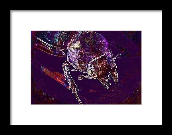 Lucane Framed Print featuring the digital art Lucane Kite Female Darling Beetle by PixBreak Art