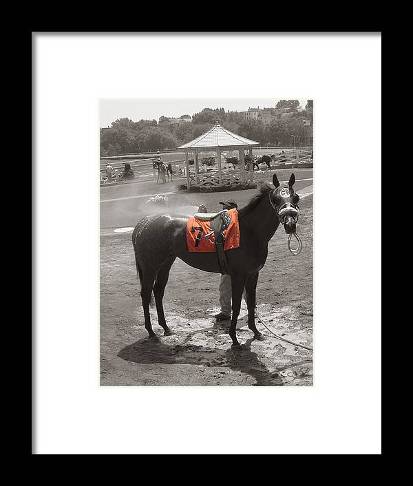 Suffolk Downs Framed Print featuring the photograph Lucky No. 7 by Heather Weikel