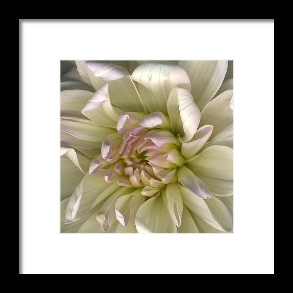 Scanography Framed Print featuring the photograph Luminous Petals by Deborah J Humphries