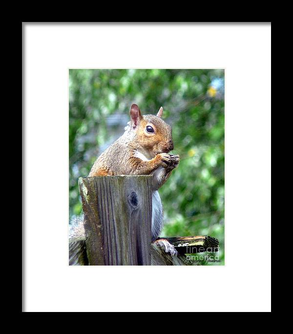 Animals Framed Print featuring the photograph Lunch by Lorraine Louwerse