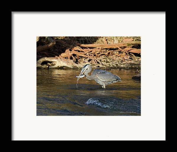 Heron Framed Print featuring the photograph Lunch On The Neuse River by George Randy Bass