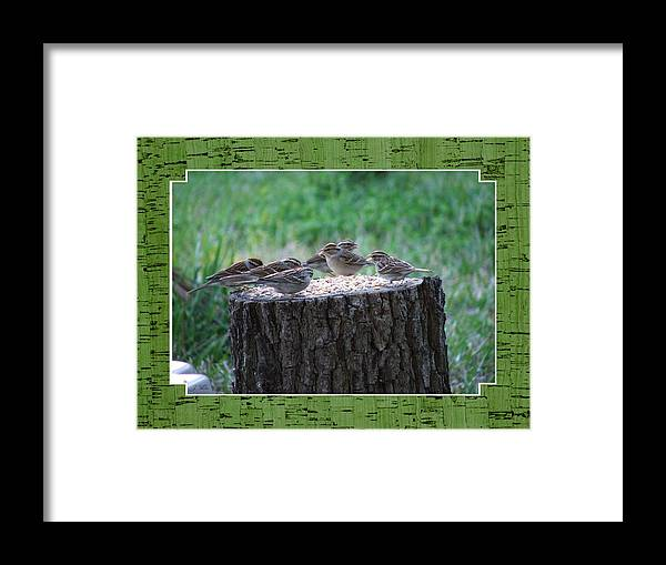 Wren's Framed Print featuring the photograph Lunch Time At The Tree Log Diner by Judy Waller