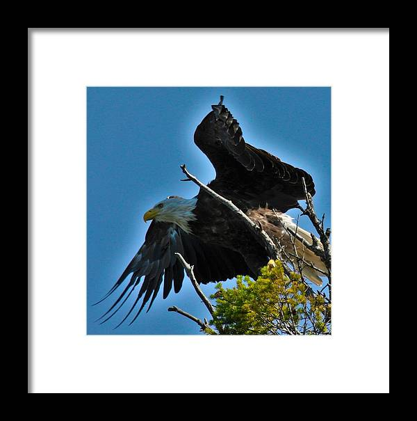 Birds Framed Print featuring the photograph Lunch Time by Taylor Howe