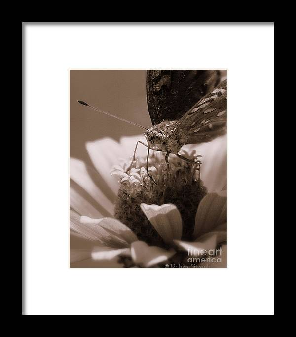 Fritillary Framed Print featuring the photograph Lunchbreak by Debra Straub
