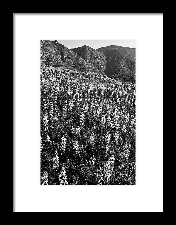 Landscape Framed Print featuring the photograph Lupine Hilltop by Greg Clure