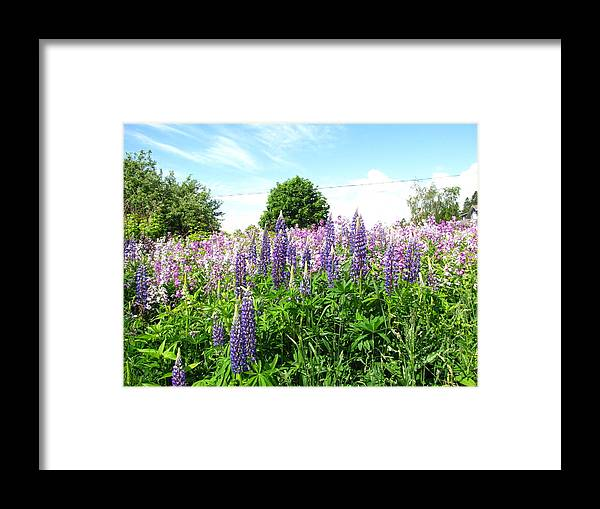 Flowers Framed Print featuring the photograph Lupins And Flocks by Melissa Parks