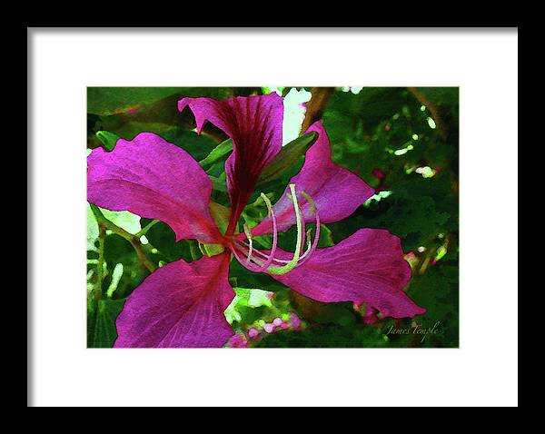 Orchid Watercolor Framed Print featuring the digital art Lure Of The Tropics Digital Watercolor by James Temple