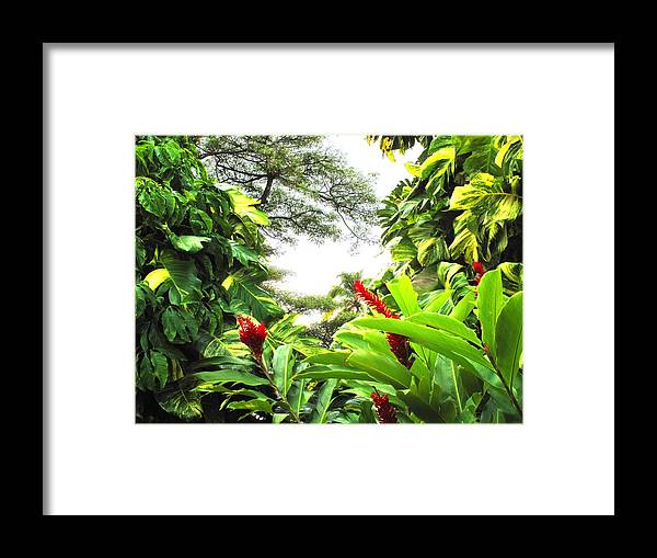 St Kitts Framed Print featuring the photograph Lush by Ian MacDonald