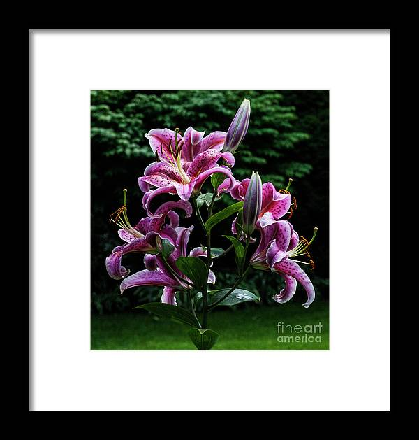 Lily Framed Print featuring the photograph Luxuriant by Doug Norkum