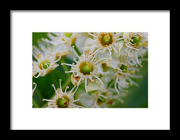 Wild Flower Framed Print featuring the photograph Macro Week by Clint Stussi