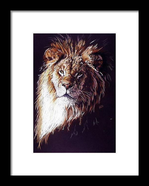 Lion Framed Print featuring the drawing Maestro by Barbara Keith