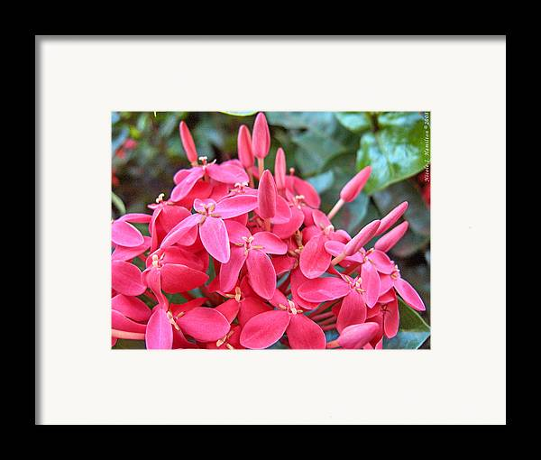 Flowers Framed Print featuring the photograph Magenta Flora by Nicole I Hamilton