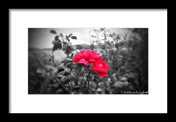 Photography Framed Print featuring the photograph Magic Flower by Michael Burleigh