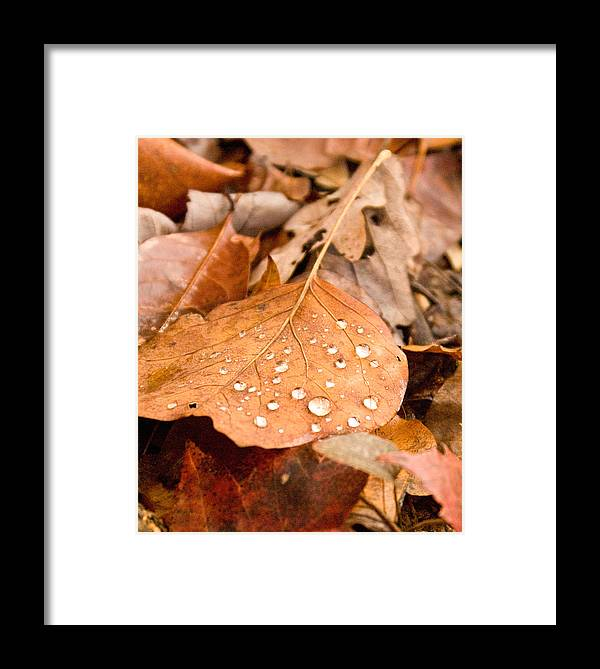 Surface Framed Print featuring the photograph Magic Of Surface Tension by Douglas Barnett