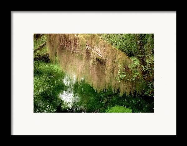 Rainforest Framed Print featuring the photograph Magical Hall Of Mosses - Hoh Rain Forest Olympic National Park Wa Usa by Christine Till
