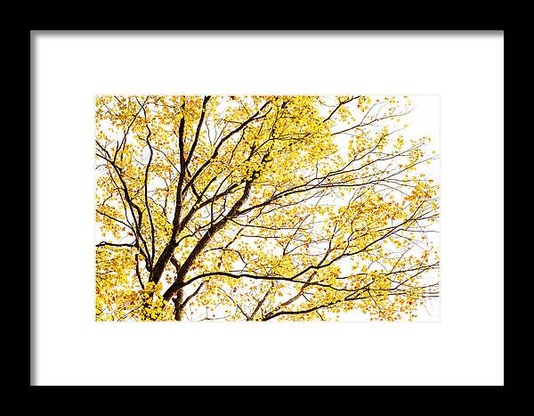 Trees Framed Print featuring the photograph Magical Tree by Iris Greenwell