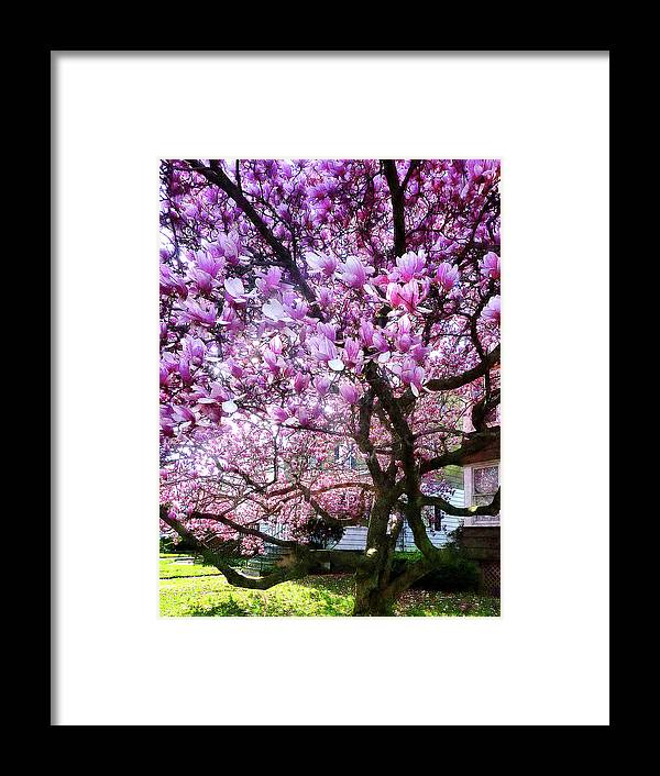 Magnolia Framed Print featuring the photograph Magnificant Magnolias by Susan Savad