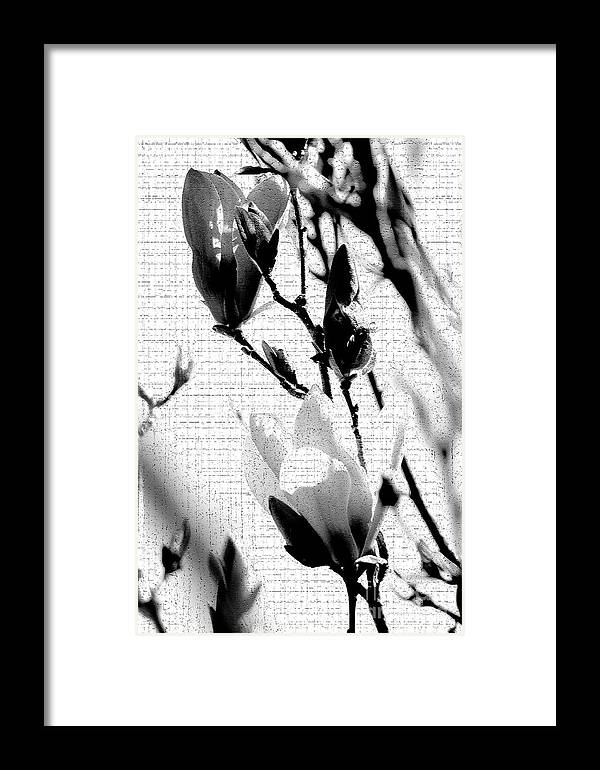 Magnolia Framed Print featuring the photograph Magnolia Art by Robin Lynne Schwind