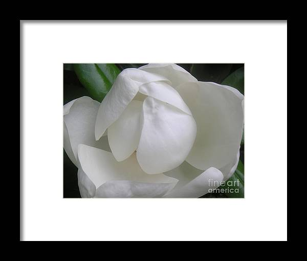 Nature Framed Print featuring the photograph Magnolia Begins Its Blooming by Lucyna A M Green