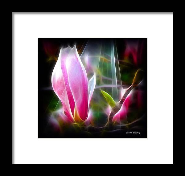 Flower Framed Print featuring the photograph Magnolia by Carola Ann-Margret Forsberg