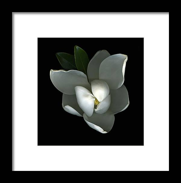 Magnolia Framed Print featuring the photograph Magnolia by Christian Slanec