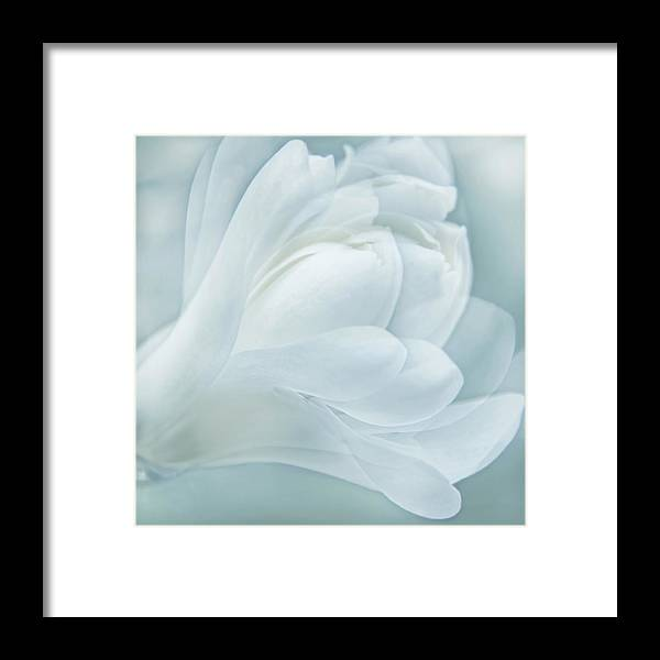 Magnolia Framed Print featuring the photograph Softness Of A Aqua Blue Magnolia Flower by Jennie Marie Schell