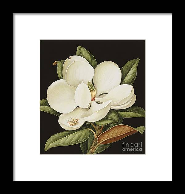 Still-life Framed Print featuring the painting Magnolia Grandiflora by Jenny Barron