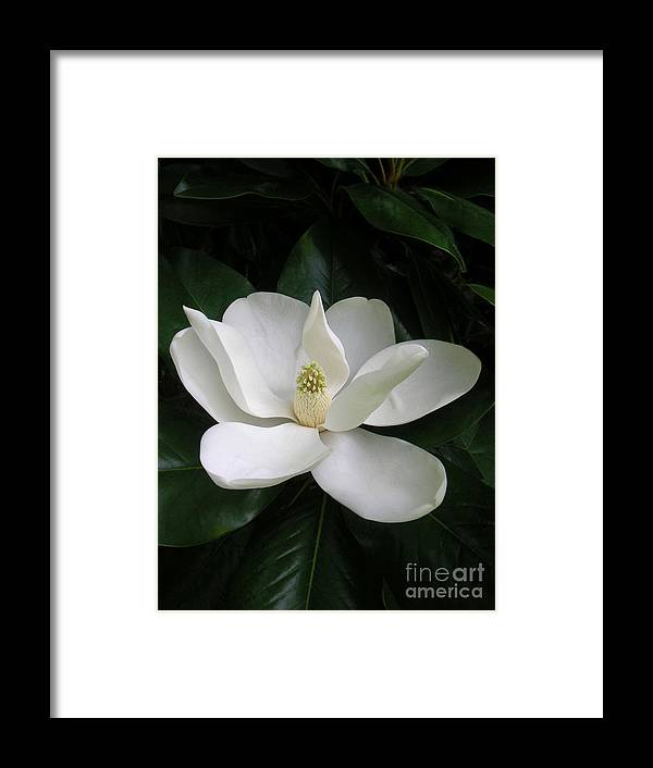 Nature Framed Print featuring the photograph Magnolia Greeting The Day by Lucyna A M Green