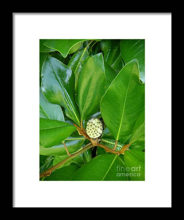 Nature Framed Print featuring the photograph Magnolia Pod by Lucyna A M Green