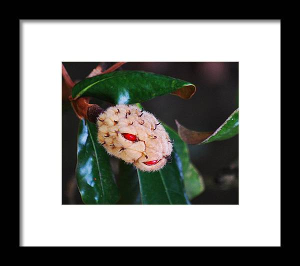 Magnolia Framed Print featuring the photograph Magnolia Serpent by Trudi Southerland