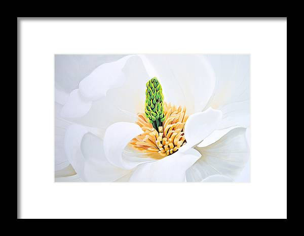 Flower Framed Print featuring the painting Magnolia by Tania Kay
