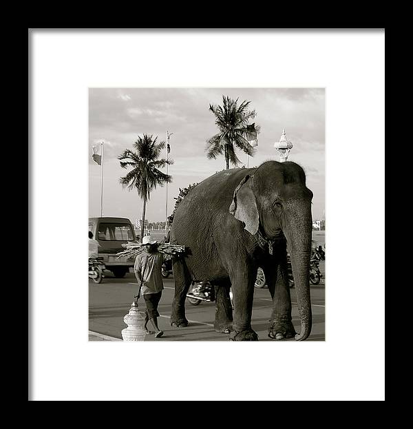 Elephant Mahout Road Busy Keeper Guide Traditional Typical Cambodia Phnom Penh Tonle Sap River Grey Framed Print featuring the photograph Mahout And Elephant by Louise Fahy