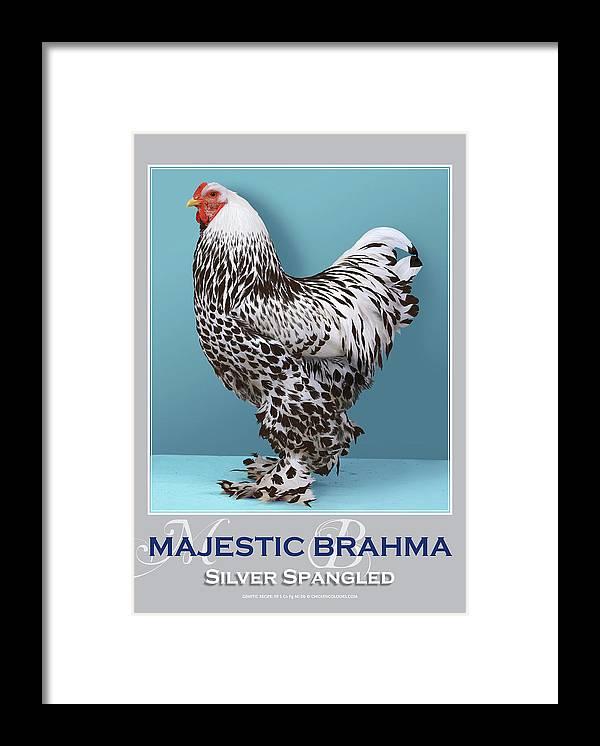 Poultry Framed Print featuring the digital art Majestic Brahma Silver Spangled by Sigrid Van Dort
