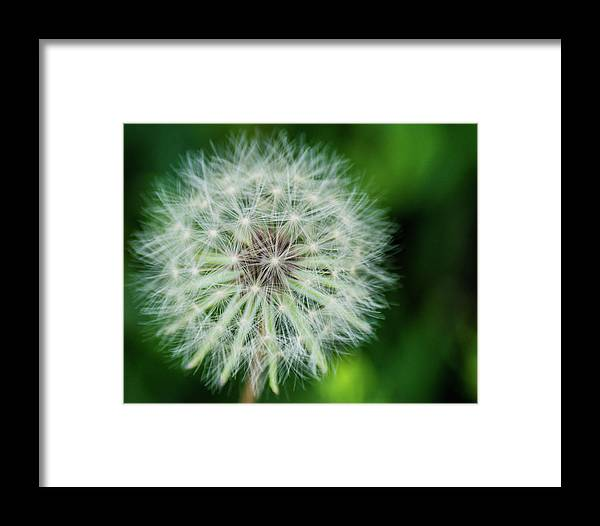 Make A Wish Framed Print featuring the photograph Make A Wish by Brian Thomas