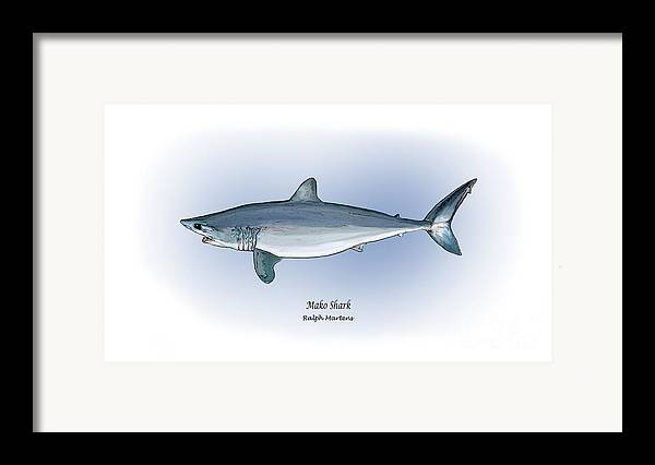 Mako Shark Framed Print featuring the painting Mako Shark by Ralph Martens