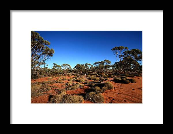 Mallee Framed Print featuring the photograph Mallee And Spinifex by Tony Brown