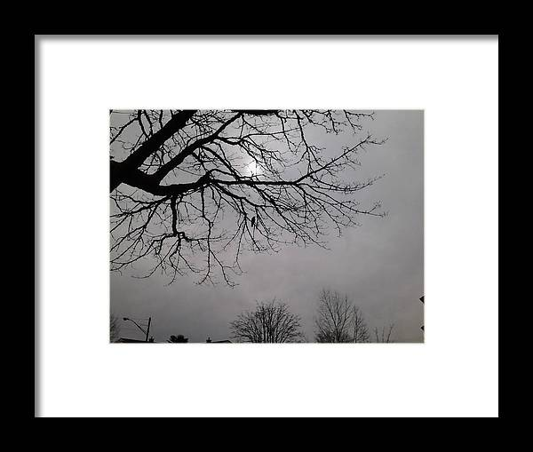 Crow Framed Print featuring the photograph Mamma Crow by Todd Artist