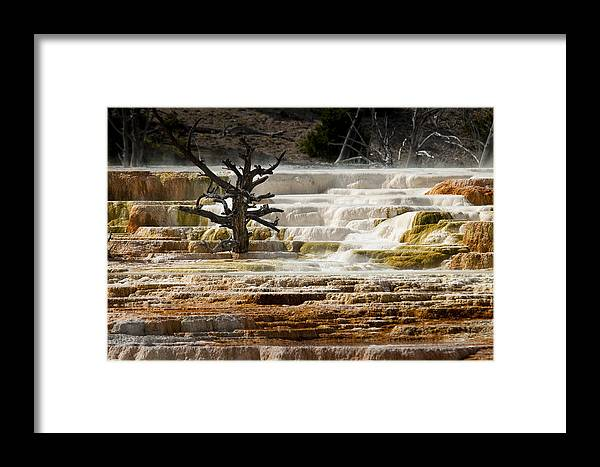 Mammoth Hot Springs Framed Print featuring the photograph Mammoth Hot Springs Beauty by Chad Davis