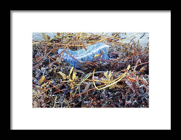 Jellyfish Framed Print featuring the photograph Man-o-war 3 - Miami Beach by Frank Mari