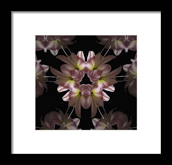 Mandala Framed Print featuring the digital art Mandala Amarylis by Nancy Griswold