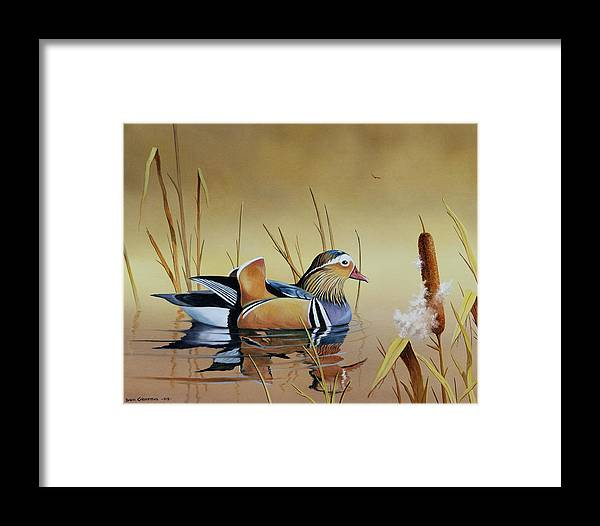 Duck Framed Print featuring the painting Mandarin Duck by Don Griffiths