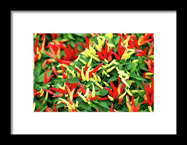Farmers Market Framed Print featuring the photograph Many Peppers by Todd Klassy