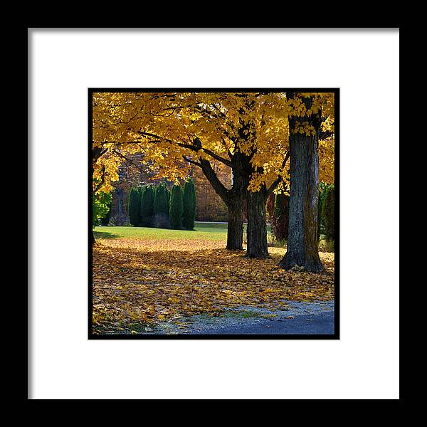 Trees Framed Print featuring the photograph Maple And Arborvitae by Tim Nyberg