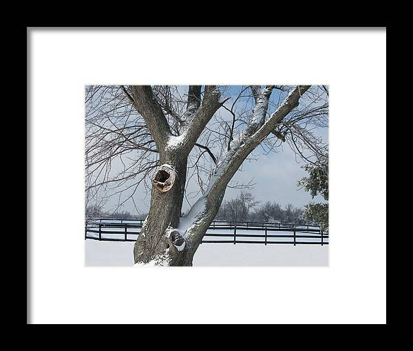 Winter Framed Print featuring the photograph Maple In Winter by Martie DAndrea