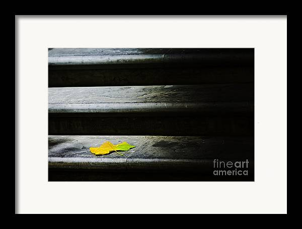 Maple Leaf Framed Print featuring the photograph Maple Leaf On Step by Sheila Smart Fine Art Photography