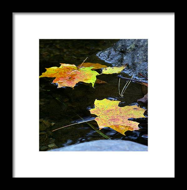 Leaf Framed Print featuring the photograph Maple Leaf by Sean Shaw